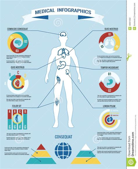 infographics human body human body medical infographics stock vector image 48901002