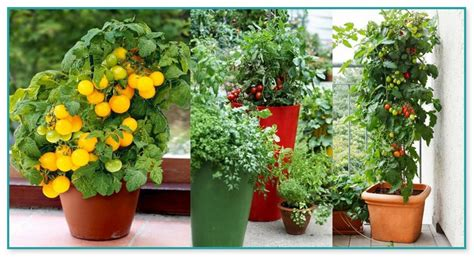 container herb gardening for beginners container herb garden for beginners
