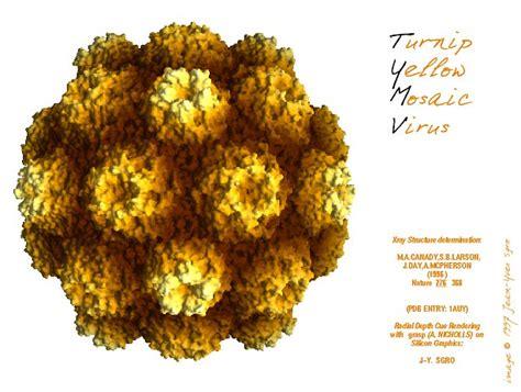 virusworld turnip yellow mosaic virus