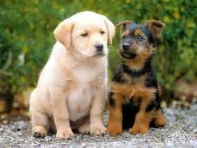Wallpaperfreeks hd cute dogs wallpapers 1600x1200