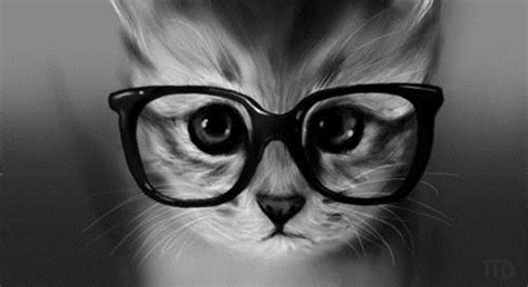 iphone wallpaper cat glasses cat and macbook wallpaper iphone wallpaper wallpaperlepi
