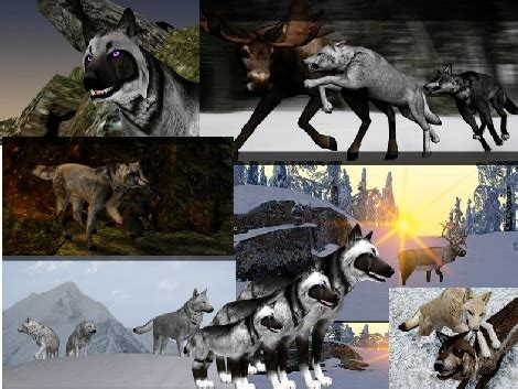 games  wolfquest animal games   human playing