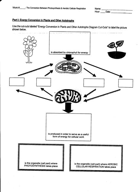 comparing photosynthesis and cellular respiration worksheet printables comparing photosynthesis and cellular respiration worksheet gozoneguide thousands