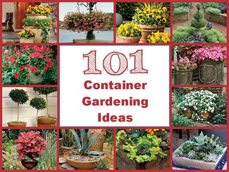 ideas for container gardening evergreens and annuals spectacular container gardening