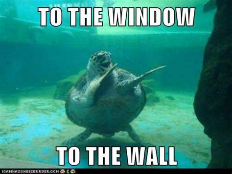 Funny Turtle Memes - funny quotes about turtles quotesgram