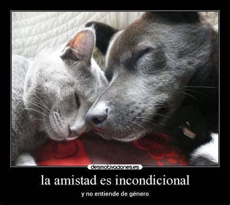 imagenes de amistad incondicional la amistad es incondicional desmotivaciones