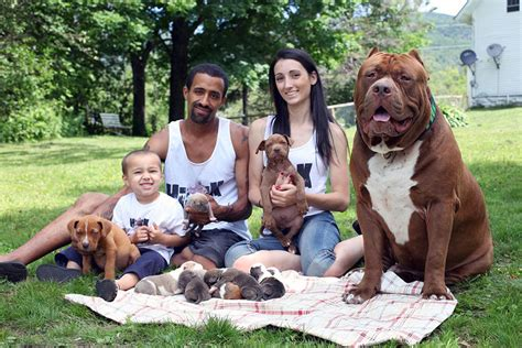how much is a pitbull puppy worth world s largest pitbull has 8 puppies worth up to half a million dollars