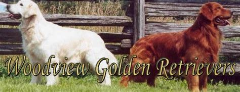 golden retriever puppies in mississippi woodview golden retriever puppies golden retriever breeders mississippi