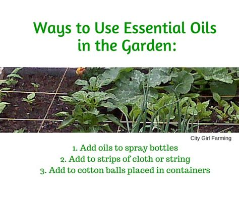 essential oils for garden pest in the garden non toxic pest with essential oils