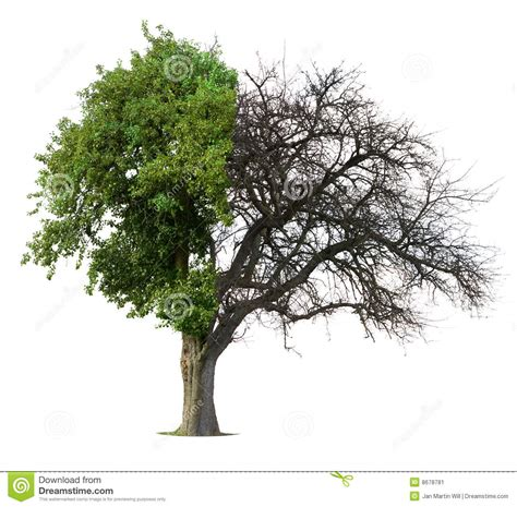 half tree half green half bare tree stock illustration image of