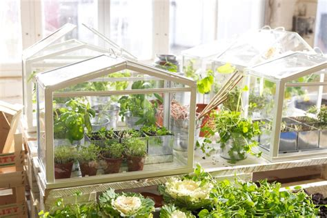 small green house pdf diy diy small greenhouse download plans for wooden shoe rack diywoodplans