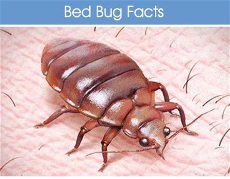 is it normal to see bed bugs after treatment 100 best images about bed bug bites on pinterest bed bug