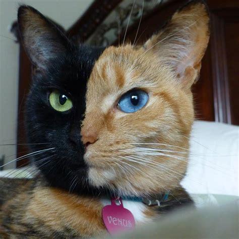 Boneka Kucing Cat 3 Colour Big Eye 9 10 Cats We That Are Just A Bit