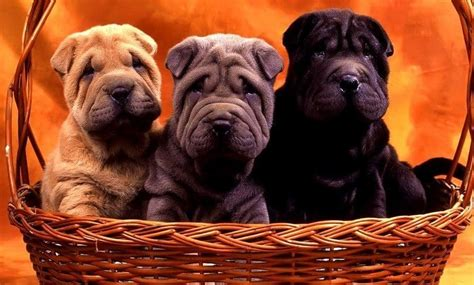 questions to ask a breeder questions to ask a breeder choose the right puppy