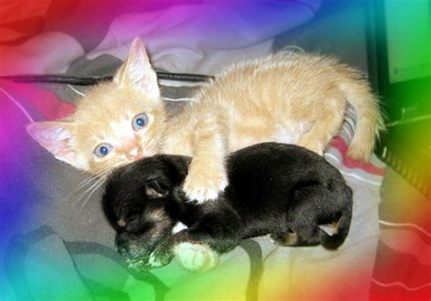 puppies and rainbows a kittens puppies bonbons and rainbows open thread we hunted the mammoth
