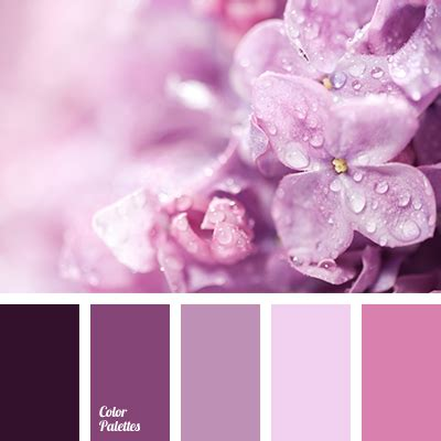 lilac colors lilac color color palette ideas