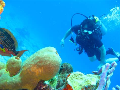 best places in the world to scuba dive top 6 places in the world to scuba dive buckitdream