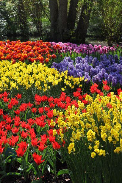 immagini fiori colorati diversi fiori colorati immagine gratis domain