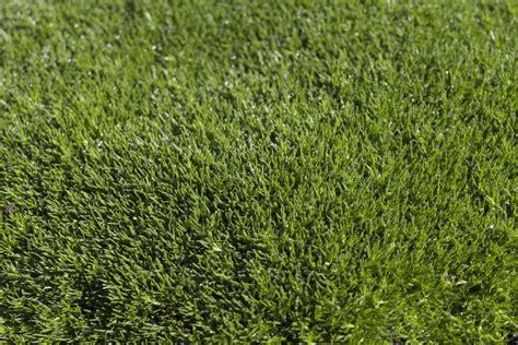 Karpet Bulu Summer ilmaisia kuvia luonto rakenne ala nurmikko niitty kukka kes 228 kev 228 t vihre 228 maaper 228