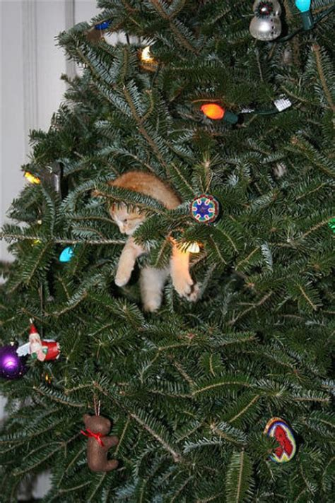 christmas tree cats 40 pics izismile com