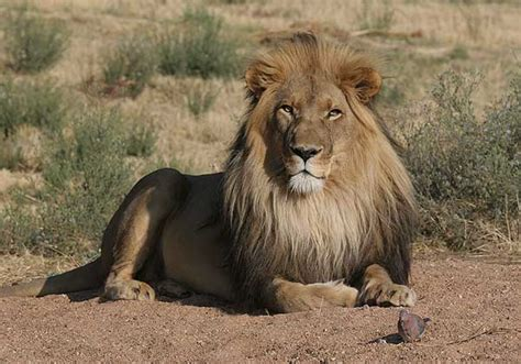 Top 10 Places To Visit In Us by Etosha National Park Namibia Tours Amp Safaris