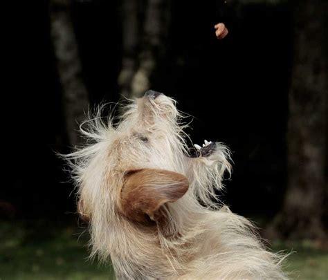 alimenti cani alimenti diete snack per cani di taglia piccola media e