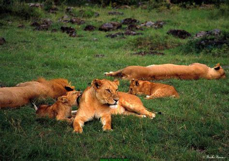 imagenes fondo de pantalla animales imagen zone gt fondos de pantalla gt animales fondos animales 28
