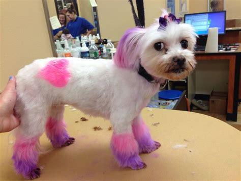 petsmart grooming petsmart grooming
