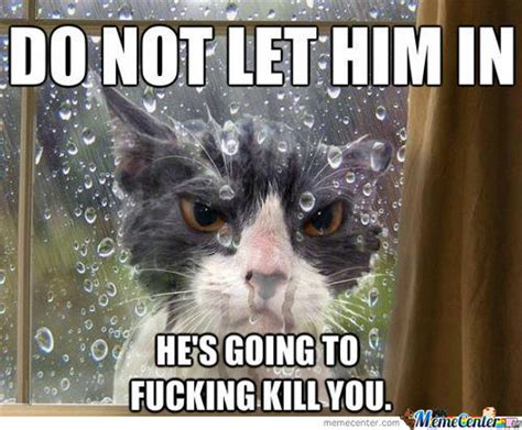 Meme Angry Cat - angry cat memes best collection of funny angry cat pictures