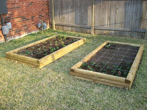 growing strawberries in raised beds raised beds after planting tomatoes strawberries and