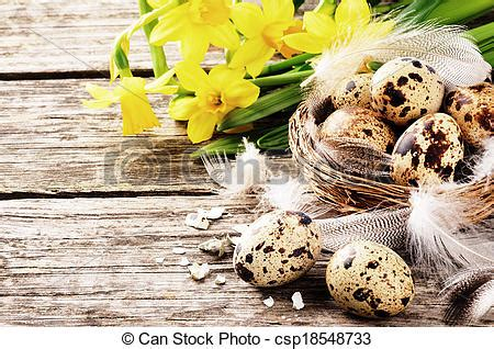 easter setting with quail eggs and yellow daffodils on old