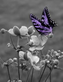 black and white purple butterfly on flower wall art matted