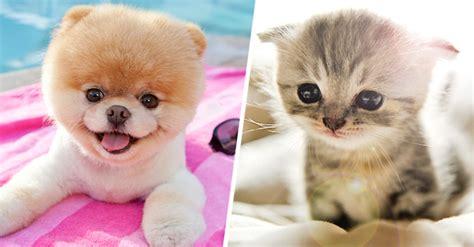 fotos animales bebes tiernos 25 fotos de animales beb 233 s que te derretir 225 n el coraz 243 n