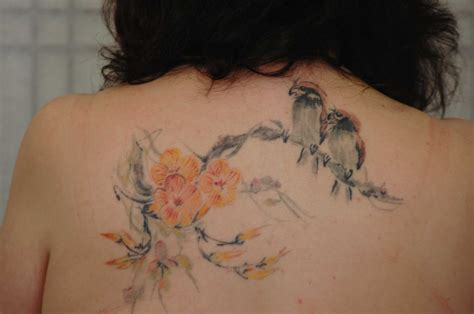 parrot tattoo free pictures bird tattoos find the best type of