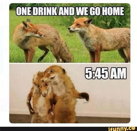 Fox Meme - fox meme 28 images red fox meme bad taxidermy fox