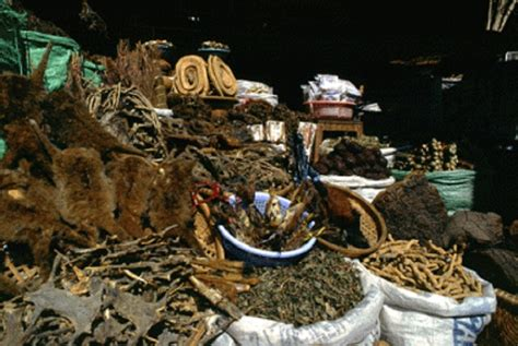 traditional medicine expert warns against intake of