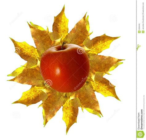 october sun royalty free stock photo image 3209445