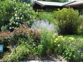 Bushes For Landscaping Landscaping