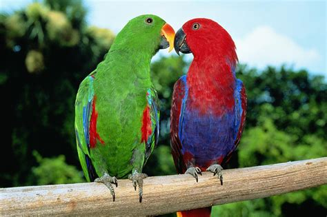 colorful parrots most colorful parrot species