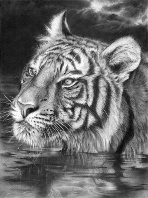 Peter Williams | Графитовые рисунки, Реалистичные рисунки