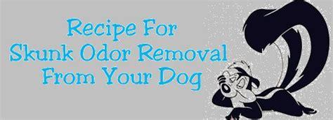 recipe for good smelling dog shoo skunks recipes for and baking soda on pinterest
