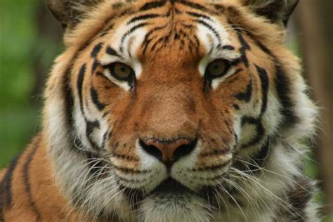costo ingresso zoo di pistoia convenzioni agriturismo marzalla