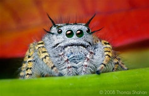 Top 10 Cute Spiders | Terrific Top 10 Invertebrates Animals Names