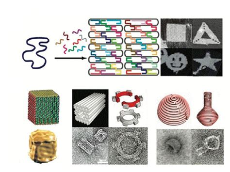 Dna Origami Applications - biomod 2014 wiki 2 html openwetware