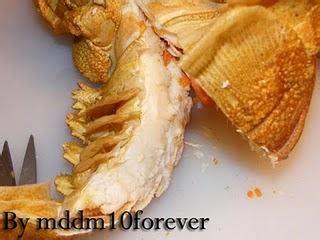 come cucinare le aragoste come cuocere l aragosta paperblog