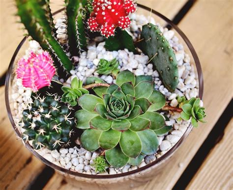 Cactus Planter by Planting A Simple Cacti Garden A Beautiful Mess