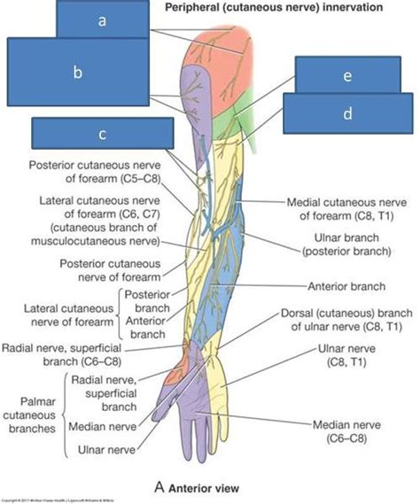 hitting nerve in elbow print anatomy block iii shoulder axilla arm cubital
