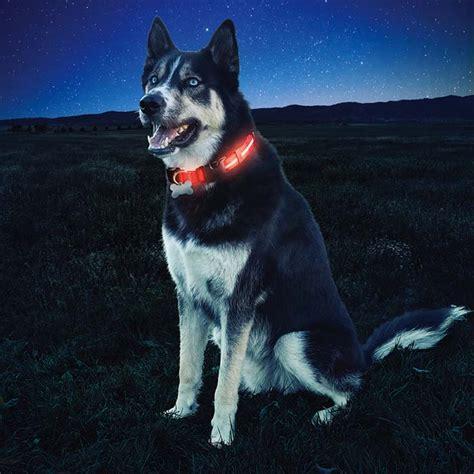 nite dawg led light  dog collar