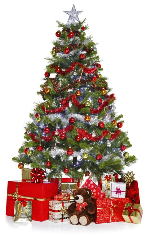 best christmas tree allergy best 28 best tree for allergies hudson allergy tribeca tree allergies