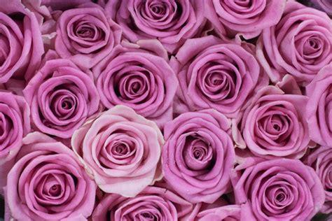 Gr Aqua Flower Pink new covent garden market